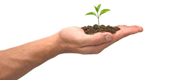 Odczyn pH gleby... Gleba