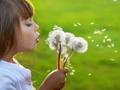 Alergie - kalendarz pylenia