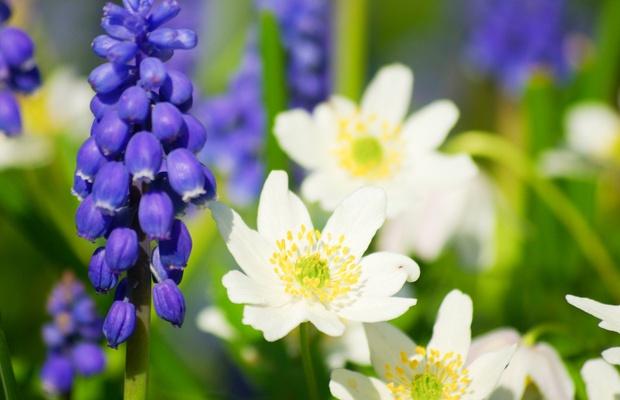 Poznaj pierwsze wiosenne kwiaty