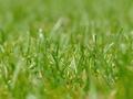 Pielęgnacja trawnika - jak dbać o trawę w cieniu