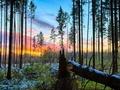 Jak określić wiek drzewa?