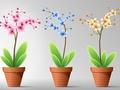 Świeże i czyste powietrze w domu dzięki 3 roślinom