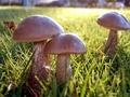 Nie podawaj dzieciom grzybów do jedzenia
