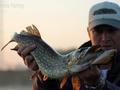 Co łowi wędkarz w mieście? Kosmiczne ryby!