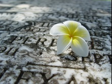 Kwiat na grobie