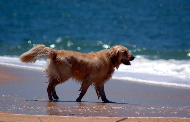 Jak pomóc psu przetrwać