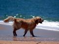 Jak pomóc psu przetrwać upały?