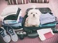 Razem czy osobno? Jak zaplanować urlop ze zwierzakiem?