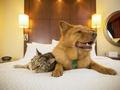 Jak dbać o mieszkanie, w którym mieszka kot i pies?