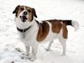 Jak ochronić psa przed mrozem?