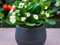 Rośliny, które oczyszczają powietrze