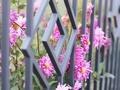 Jakie rośliny posadzić przy ogrodzeniu?
